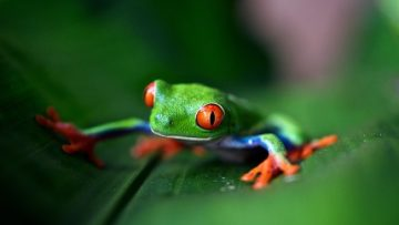 35 Tropical Rainforest Facts