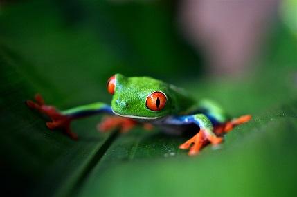 35 Tropical Rainforest Facts